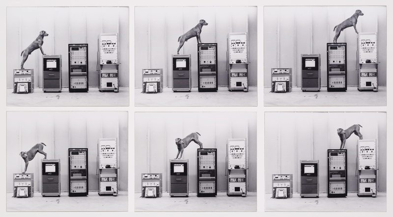 William Wegman - Ray-o-vac (1973)